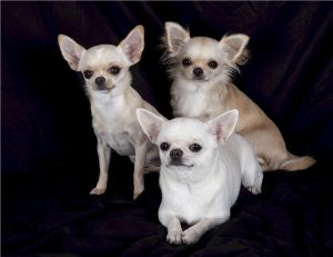 cheap designer dog carriers